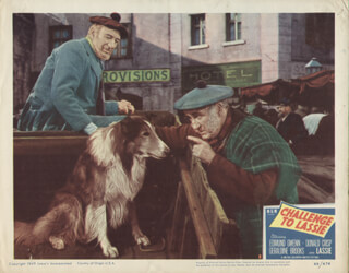 CHALLENGE TO LASSIE MOVIE CAST - LOBBY CARD UNSIGNED (USA) 1949